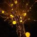 埼玉県・滑川町にある森林公園のイベントがすごい! 光と森のコントラスト